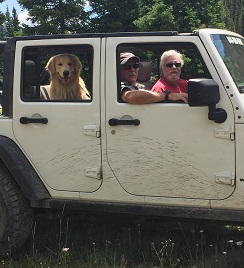 Jeeps and Dogs